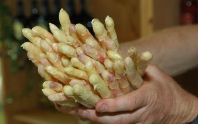 kann glyphosat in spargel angewendet werden